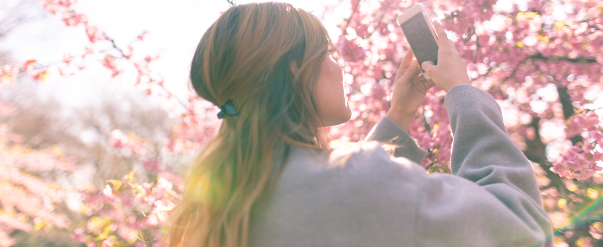 Young Hispanic woman taking picture of cherry blossoms using smart phone.